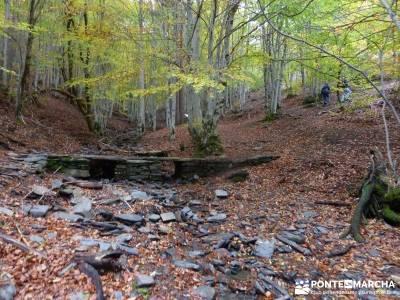 Hayedo de Tejera Negra [Serie Clásica];senderismo picos europa excursiones a la montaña